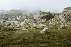 Prato alpino in Andorra Immagine Stock