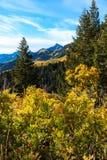 Prato alpino in autunno Fotografia Stock Libera da Diritti