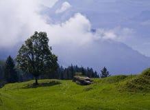 Prato alpino con una pianta ad alta altitudine del pascolo Fotografia Stock Libera da Diritti