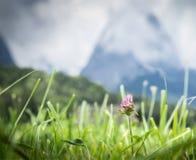 Prato alpino contro le montagne ed il cielo di luce solare immagine stock libera da diritti