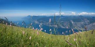 Prato alpino del fiore alla montagna di baldo del monte Immagini Stock Libere da Diritti