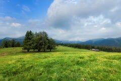 Prato alpino di estate Immagine Stock Libera da Diritti