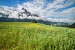 Prato alpino di estate Fotografie Stock Libere da Diritti