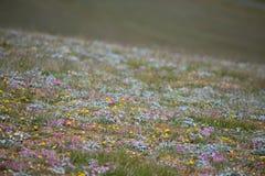 Prato alpino di estate Fotografia Stock
