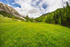 Prato alpino di fioritura Immagini Stock