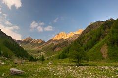 Prato alpino di fioritura e terreno boscoso verde fertile Immagini Stock