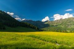 Prato alpino di fioritura e terreno boscoso verde fertile Fotografia Stock