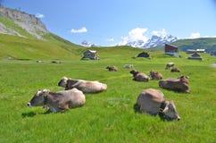 Prato alpino. Melchsee-Frutt, Svizzera fotografia stock