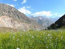 Prato alpino nelle montagne del fan del Tagikistan Immagini Stock Libere da Diritti