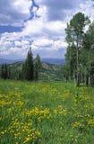 Prato alpino nelle Montagne Rocciose Fotografia Stock Libera da Diritti