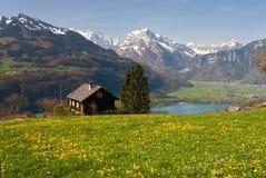 Prato alpino in primavera Fotografia Stock