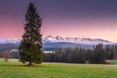 Prato alpino verde nel mornong Fotografia Stock