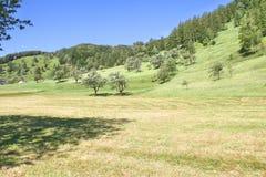 Prato alpino vicino a Tolmino, Slovenia immagine stock