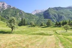 Prato alpino vicino a Tolmino, Slovenia Fotografia Stock