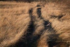 Prato asciutto di inverno con un fagiano sulla strada Fotografia Stock