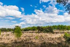 Prato bruciato in cielo blu arido del paesaggio di estate fotografia stock