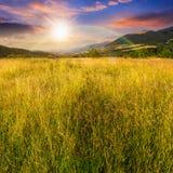 Prato con alta erba in montagne al tramonto Fotografia Stock Libera da Diritti