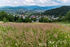 Prato con alte erba ed orecchie In precedenti, città e montagne Immagini Stock Libere da Diritti