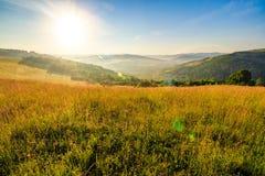 Prato con erba alta in montagne ad alba Immagine Stock