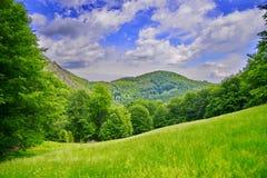 Prato con erba e le montagne Fotografie Stock