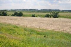 Prato con erba falciata Fotografia Stock Libera da Diritti