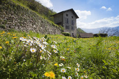 Prato con fiori e Casetta Royalty Free Stock Image