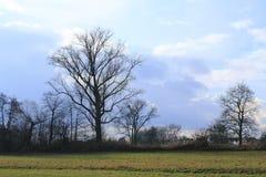 Prato con gli alberi con le nuvole di tempesta della riunione vicino a Sandweier Baden-Baden in foresta nera Fotografie Stock Libere da Diritti