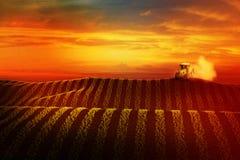 Prato con grano o verdure e trattore crescenti sull'orizzonte Immagine Stock Libera da Diritti