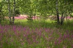 Prato con i bei fiori selvaggi nell'estate Fotografia Stock Libera da Diritti