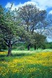 Prato con i fiori 4 Immagine Stock Libera da Diritti
