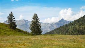 Prato con i fiori bianchi in alte montagne Fotografie Stock Libere da Diritti
