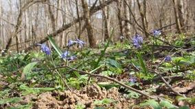 Prato con i fiori blu video d archivio