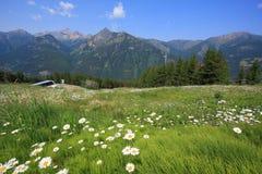 Prato con i fiori e la montagna nei precedenti Fotografia Stock