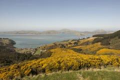 Prato con i fiori gialli, Nuova Zelanda fotografia stock libera da diritti