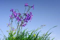 Prato con i fiori selvaggi fotografie stock libere da diritti