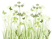 Prato con i wildflowers illustrazione di stock
