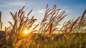 Prato con il tramonto in Tailandia fotografia stock libera da diritti