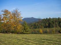Prato con la foresta variopinta ed alberi di autunno e colline con lo sguardo Immagini Stock