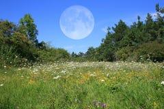 Prato con la luna Fotografia Stock