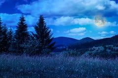 Prato con nelle montagne Fotografia Stock Libera da Diritti