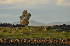 Prato con una parete di pietra alla luce del tramonto Fotografia Stock