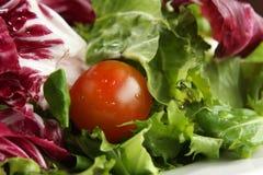 Prato da salada Fotografia de Stock Royalty Free