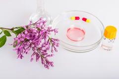 Prato de Petri com extrato erval para cosméticos Imagens de Stock Royalty Free