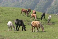 prato dei cavalli Immagini Stock
