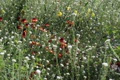Prato dei wildflowers Fotografia Stock