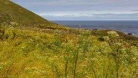 Prato dei wildflowers in Carmel Calfornia dal mare fotografia stock libera da diritti