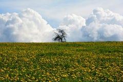 Prato del dente di leone con l'albero ed il cielo blu Immagini Stock Libere da Diritti