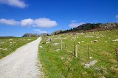 Prato del fiordo e pecore 025 Immagine Stock