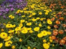 Prato del fiore Fotografia Stock
