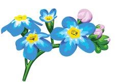 Prato del fiore Fotografie Stock